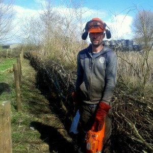 Hedgelaying in Somerset
